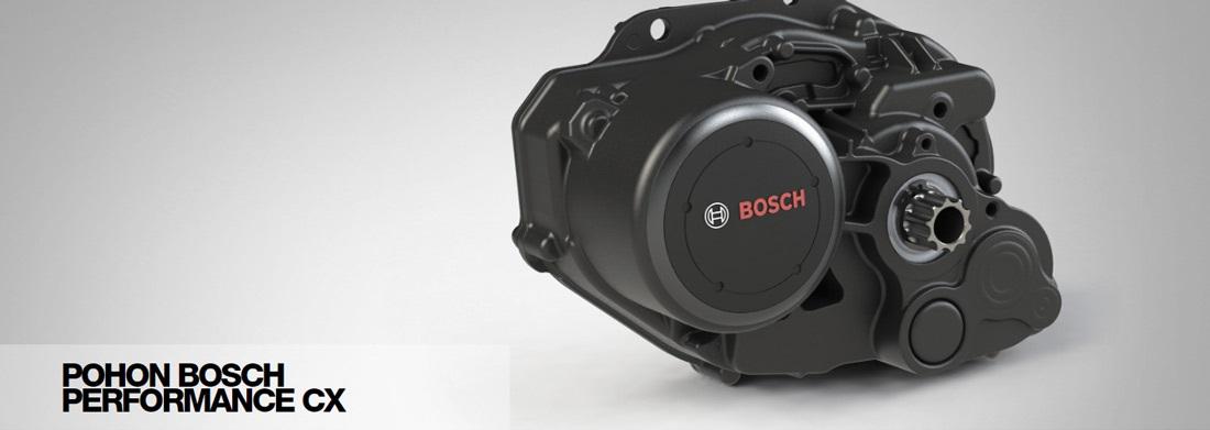 Pohon Bosch